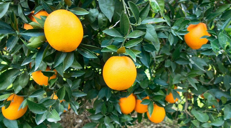 Happy Vitamin C Day!
